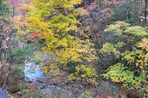 川(水)と紅葉